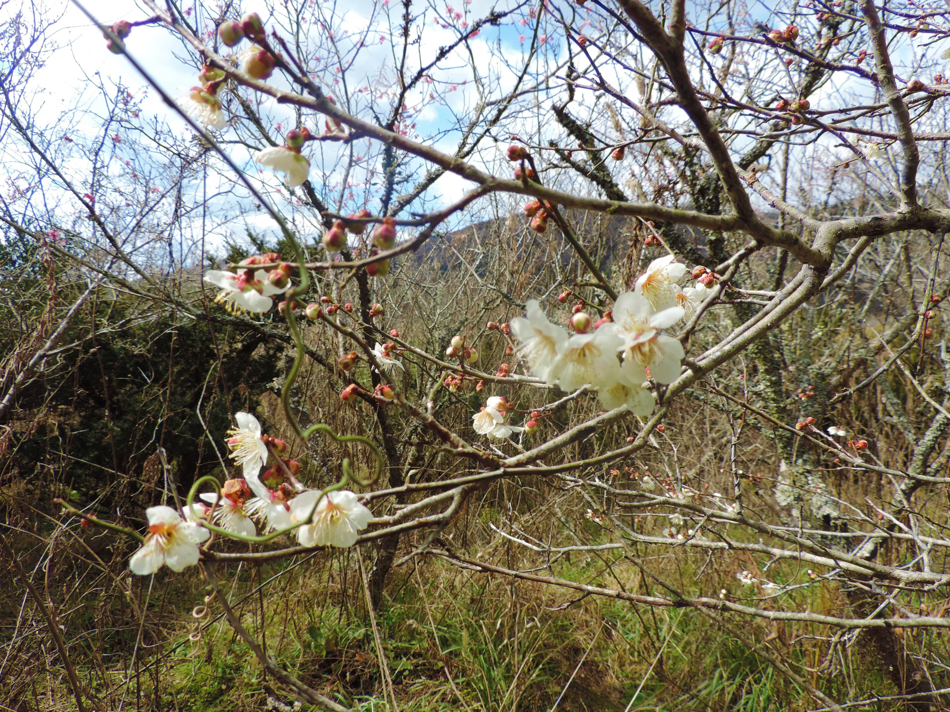 伊賀教室周辺のお花たちをご紹介します!