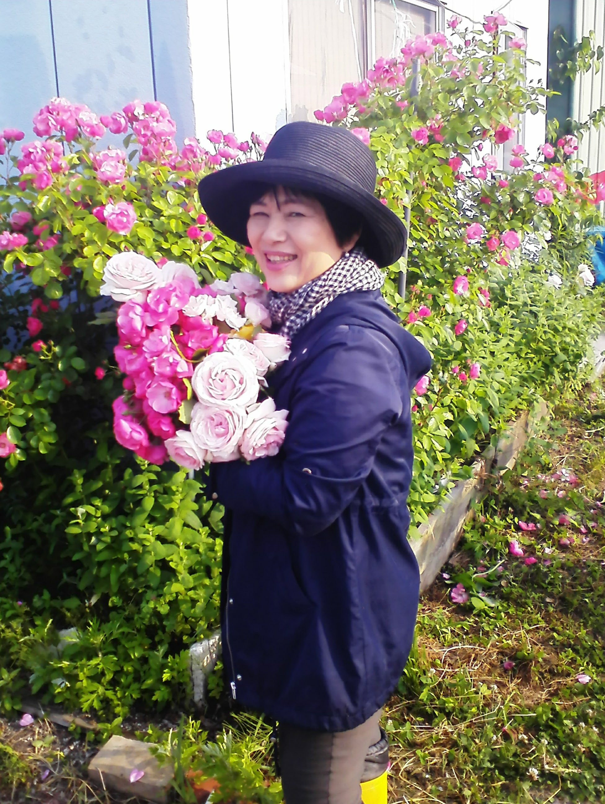今年もバラが咲きました!