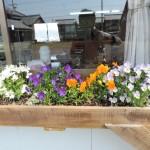 【綺麗♥】お花たちAROUND伊賀教室!