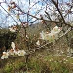 【春の訪れ♥】お花たち AROUND 伊賀教室!