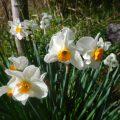 【2016年4月】癒される!伊賀教室の周りのお花たち!